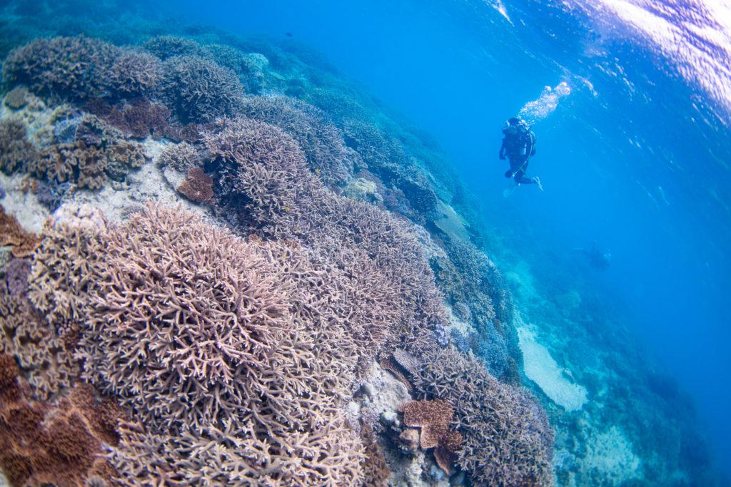 相変わらずサンゴ盛り盛りな牧港沖