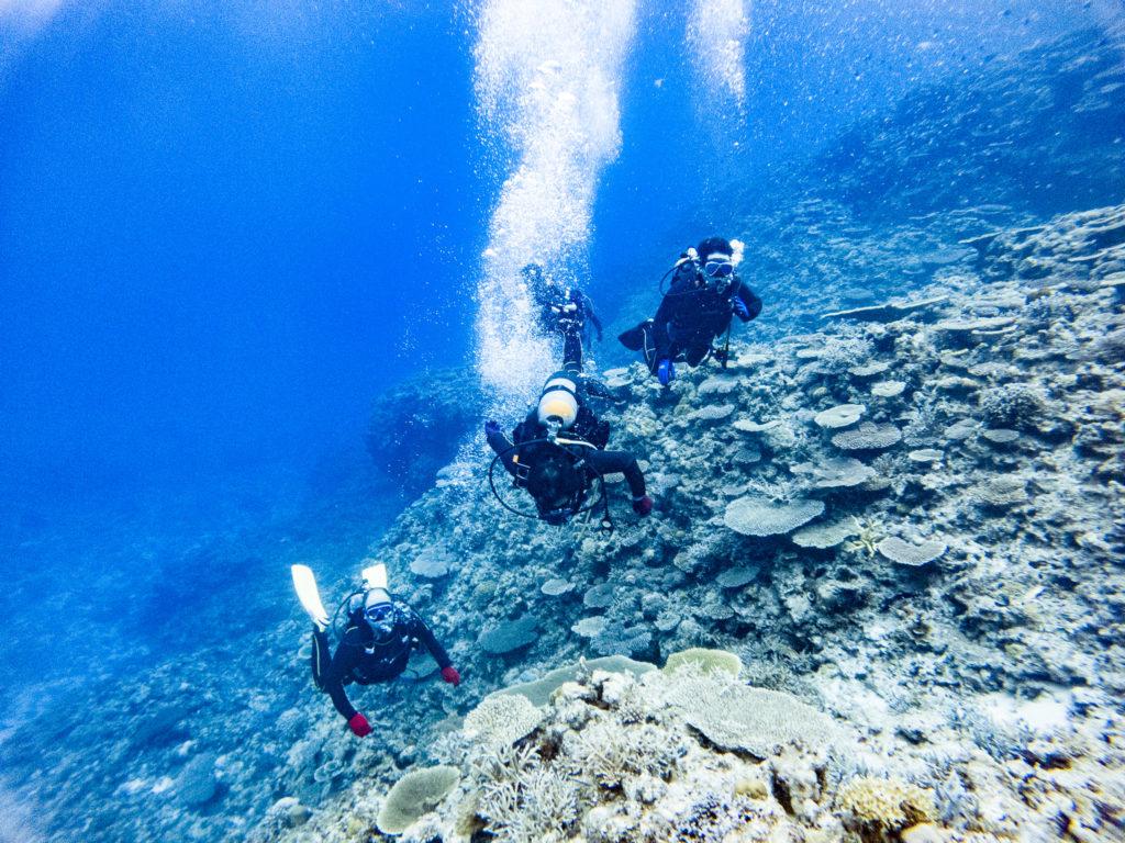 1本目は外地島へ。サンゴがめちゃめちゃ綺麗
