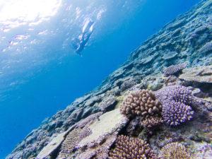 珊瑚とゲスト